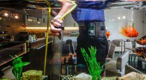 bien choisir un aspirateur pour aquarium