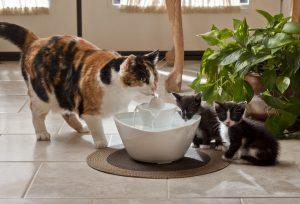 avantages fontaine a eau chat