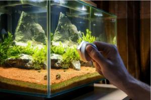 bien entretenir un aquarium