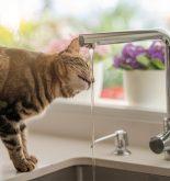 combien de litres boit un chat