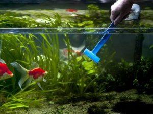 nettoyage d'un aquarium