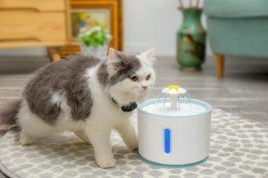 où mettre une fontaine à eau pour chat dans sa maison