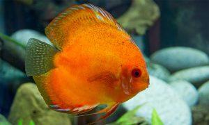 poisson bonne qualité eau