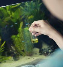 test qualité eau aquarium