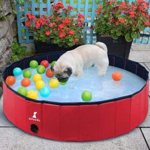 bien choisir une piscine pour chien