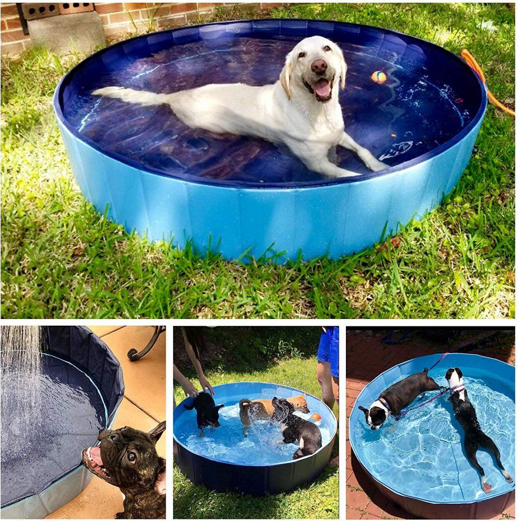 meilleure piscine pour chien